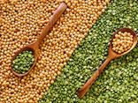 Fazuľa, ľanové semiačko, šošovica, cícer, hrášok a iné poľnohospodárske výrobky. - фото 2