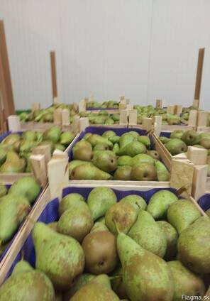 Груши из Польши! Pears from Poland