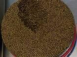 Caviar from sturgeon - photo 1