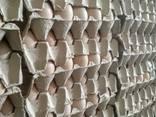 Násadové vajce ROSS-308, od výrobcu - photo 1