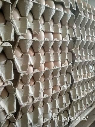 Násadové vajce ROSS-308, od výrobcu