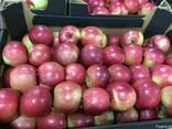 Polish apples, La-Sad - фото 6