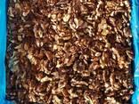 Продам орех грецкий 1\2 бабочка (янтарный) от 20 тонн. Цена - фото 1
